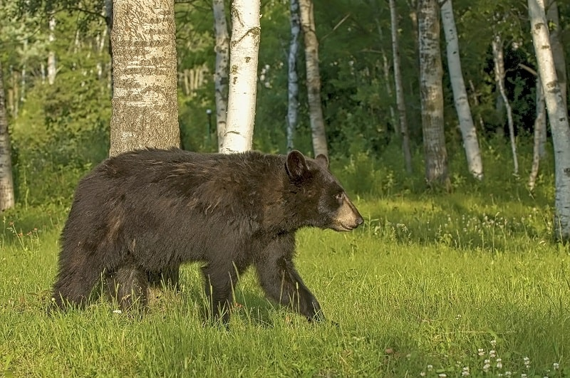 MN Black Bear Off Roading