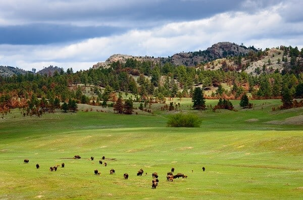 ATV Black Hills