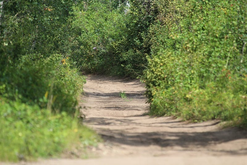 Ocala National Forest offroad trails